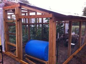 Duck pen attached to the shade house. The blue barrel is a diy soldier fly composter.